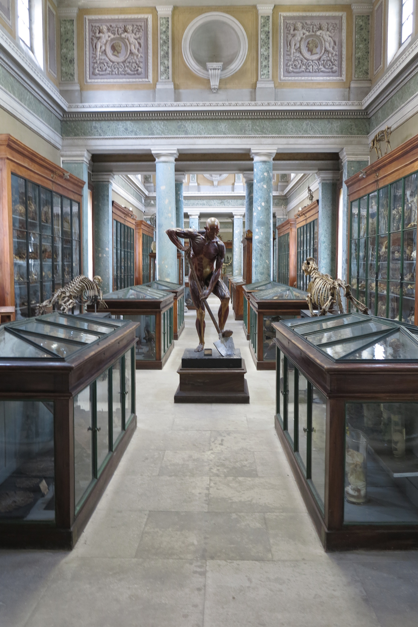 Museum Of Anatomy Of The Faculty Of Medicine In Montpellier France