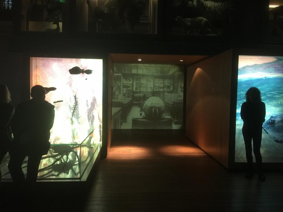 Projection of old museum in-between new displays